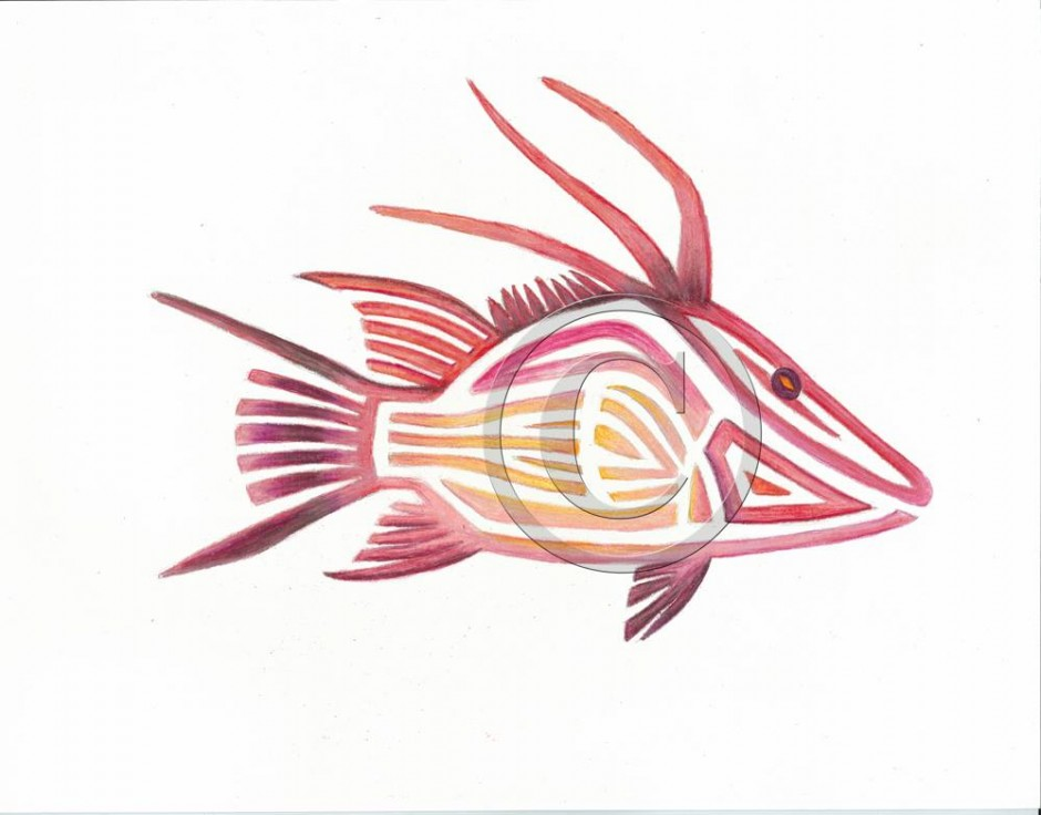 Tribal Hogfish